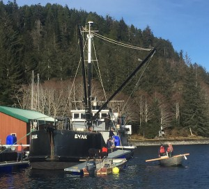 Eyak in Port Armstrong Feb., 2016. Hatchery net pens are being assembled. (Photo by Anna Zimmerman)